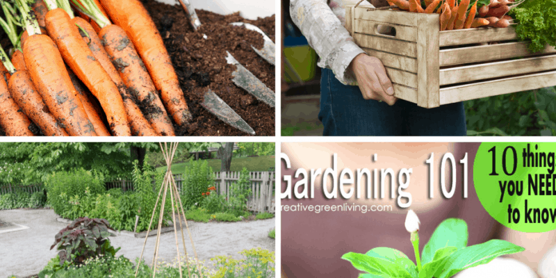 Starting a Garden: A Beginners Guide