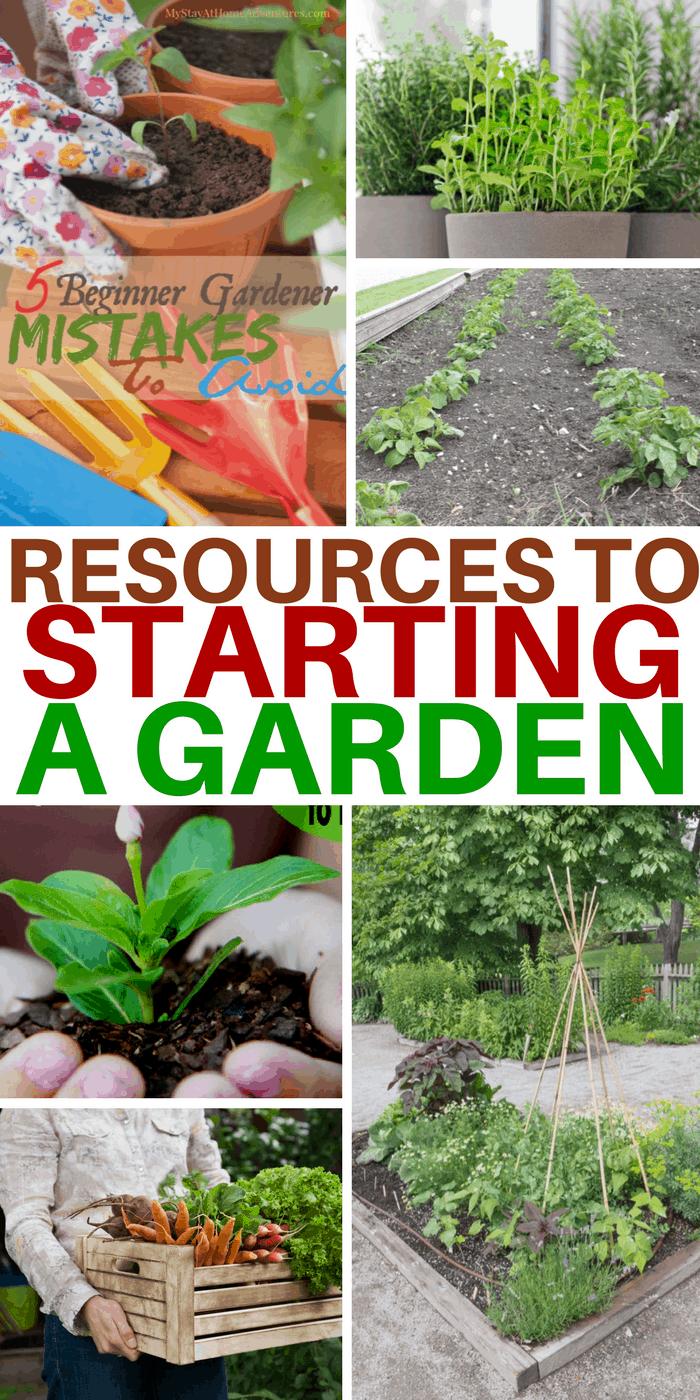 Starting A Garden A Beginners Guide